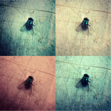 GALLERY FLY part I